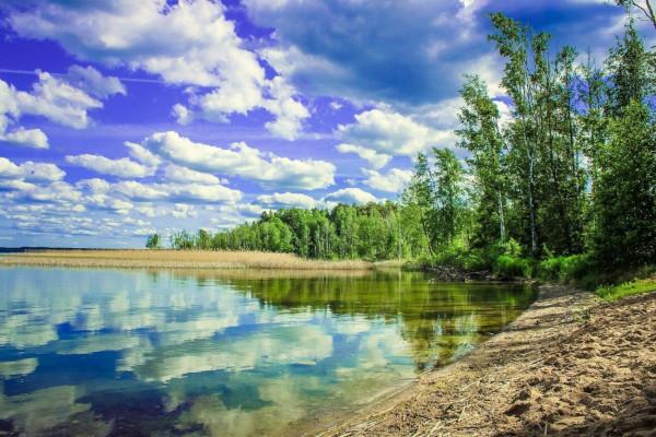 В Калининградской области возбудили дело из-за массовой гибели рыбы в озере. рыба, озеро, Правдинский район, Калининградская область