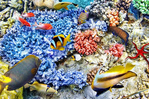 Биоразнообразие рыб связано со здоровьем коралловых рифов. 15729.jpeg