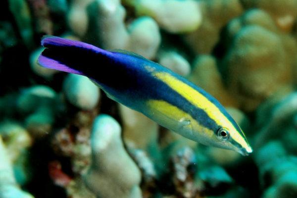 Кто главный житель коралловых рифов?. 14732.jpeg