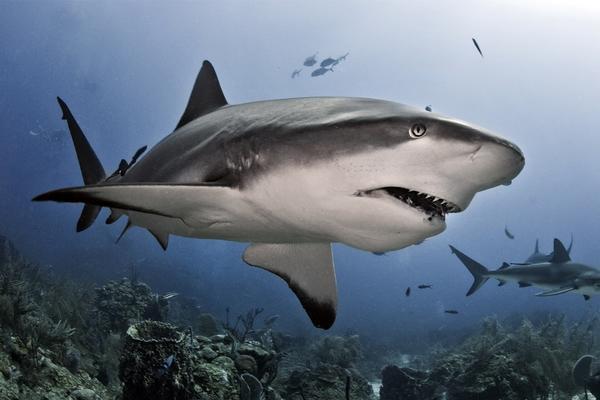 В Австралии акула покусала дайвера. 14738.jpeg