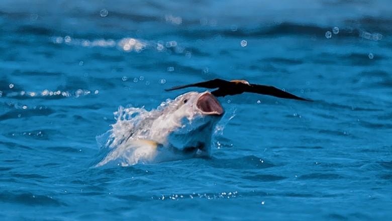 Ученые узнали, что рыбы могут питаться птицами. 13747.jpeg