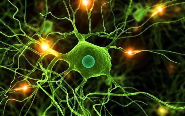 Продолжительность жизни связана с количеством нейронов. 13753.jpeg