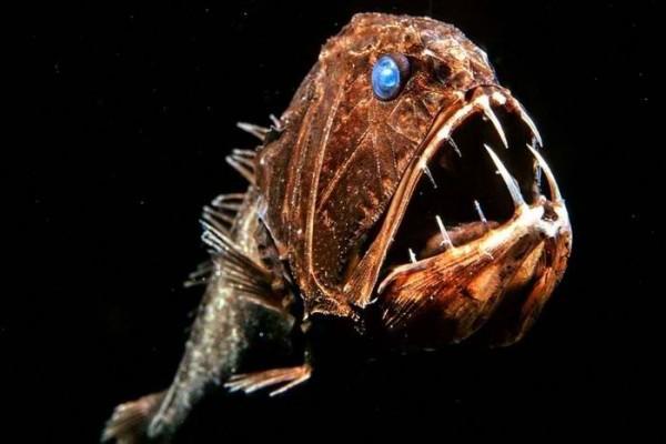 Ученые изучают морских обитателей глубоководных впадин.. 14755.jpeg