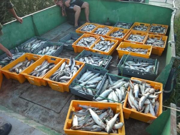Браконьеры в Таганрогском заливе наловили на 7 миллионов рублей. рыба, рыбаки, браконьеры, Таганрогский залив