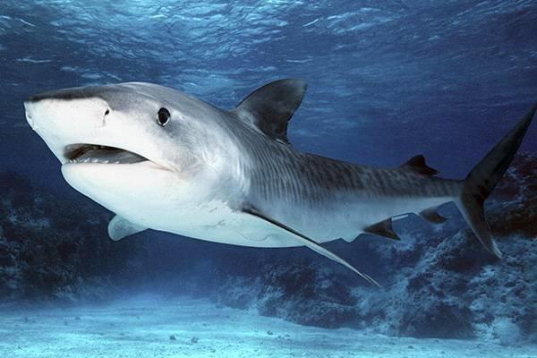 Жизнь акулы: найти подходящее место и выспаться. 14764.jpeg
