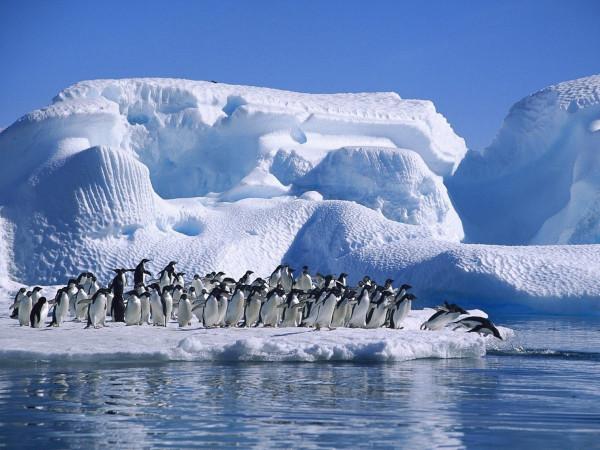 От Антарктиды откололся айсберг массой в 315 миллиардов тонн. экология, айсберг, Антарктида, зона Эмери, гляциологи, ученые, Мировой океан