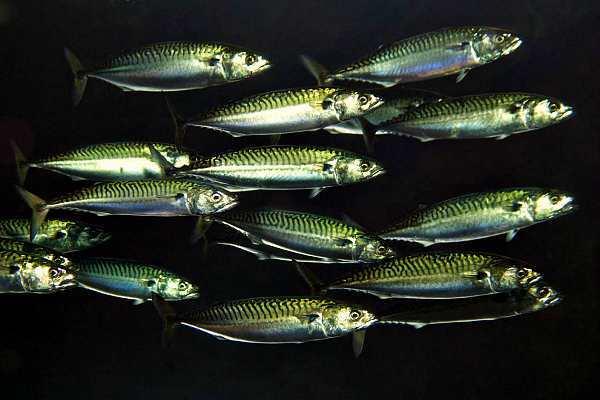 Слепые рыбы. 14766.jpeg