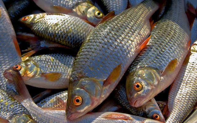 Оснащение для зимней рыбалки на карася. 13770.jpeg