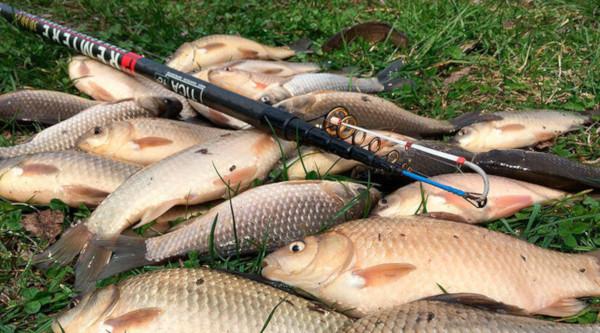 В Самарской области изъяли 10 тонн незаконно пойманной рыбы. рыба, браконьеры, Самарская область