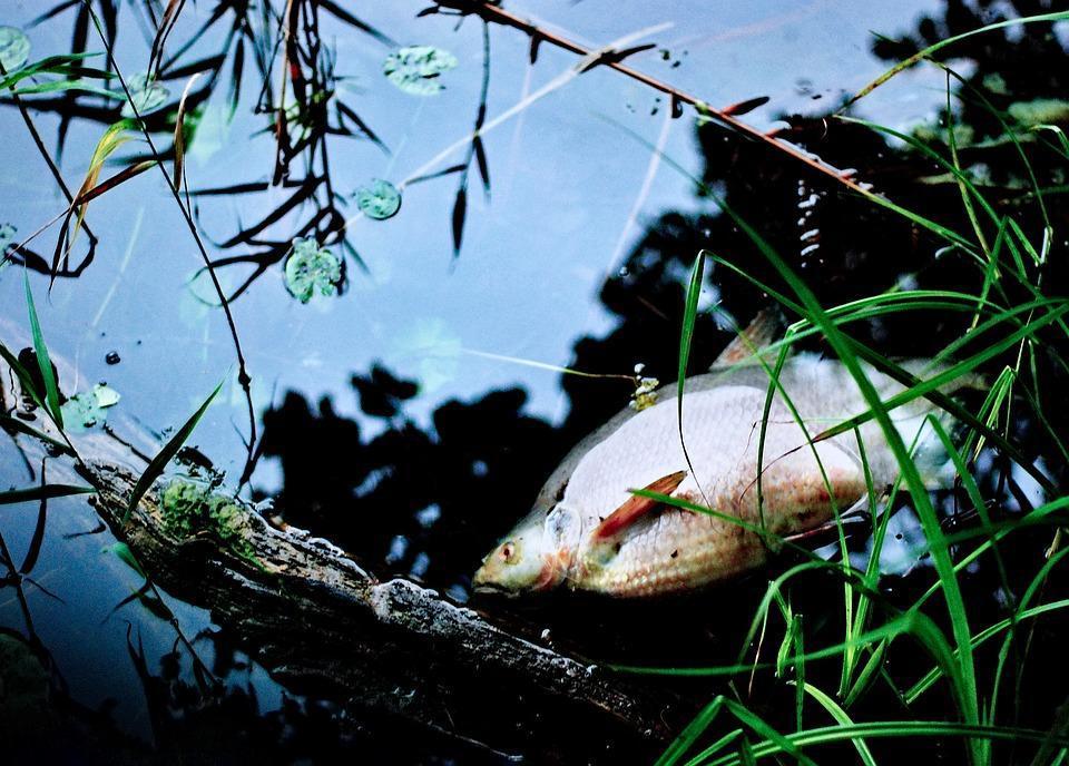 Замор рыбы нашли под Новосибирском. 15776.jpeg