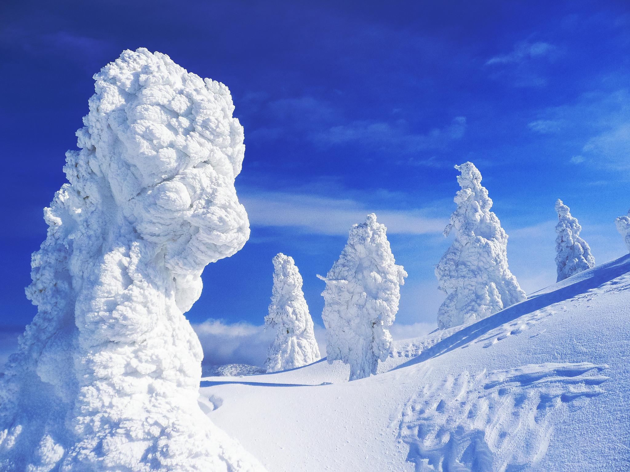 В Японии заканчивается время снежных монстров. 14783.jpeg