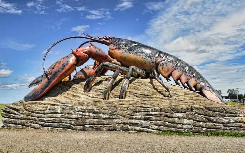 В океане есть бессмертные существа. 14792.jpeg