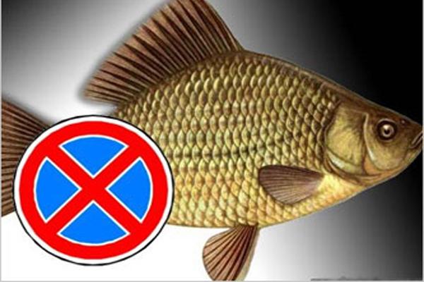 Какую рыбу нельзя употреблять человеку.. 13834.jpeg