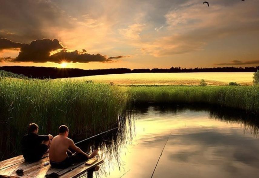 Условия в водоеме и поведение рыб