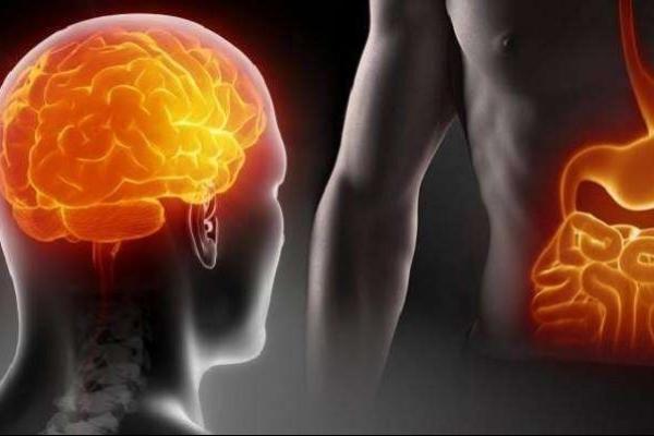 Бактерии из кишечника могут переселяться в мозг. 13843.jpeg