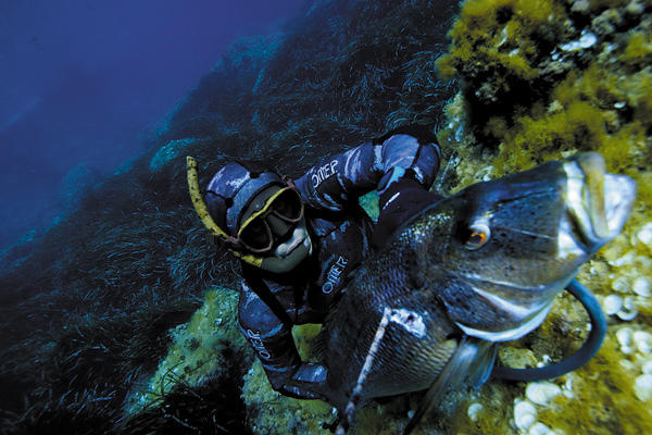 Подводная охота - что нужно знать.. 13851.jpeg