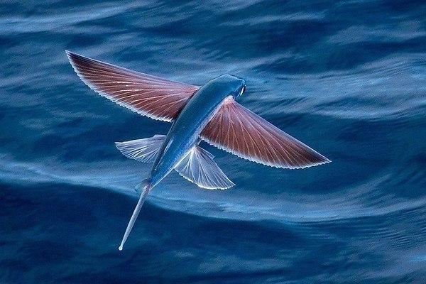 Интересно о рыбах.. 13868.jpeg