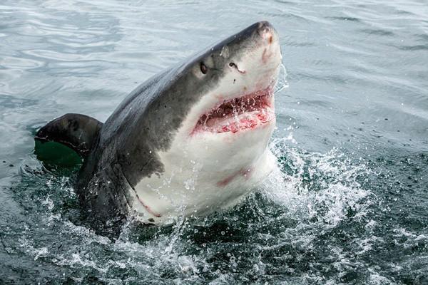 Подводный беспилотник нашел «невероятный» питомник акул у берегов Ирландии. 13870.jpeg
