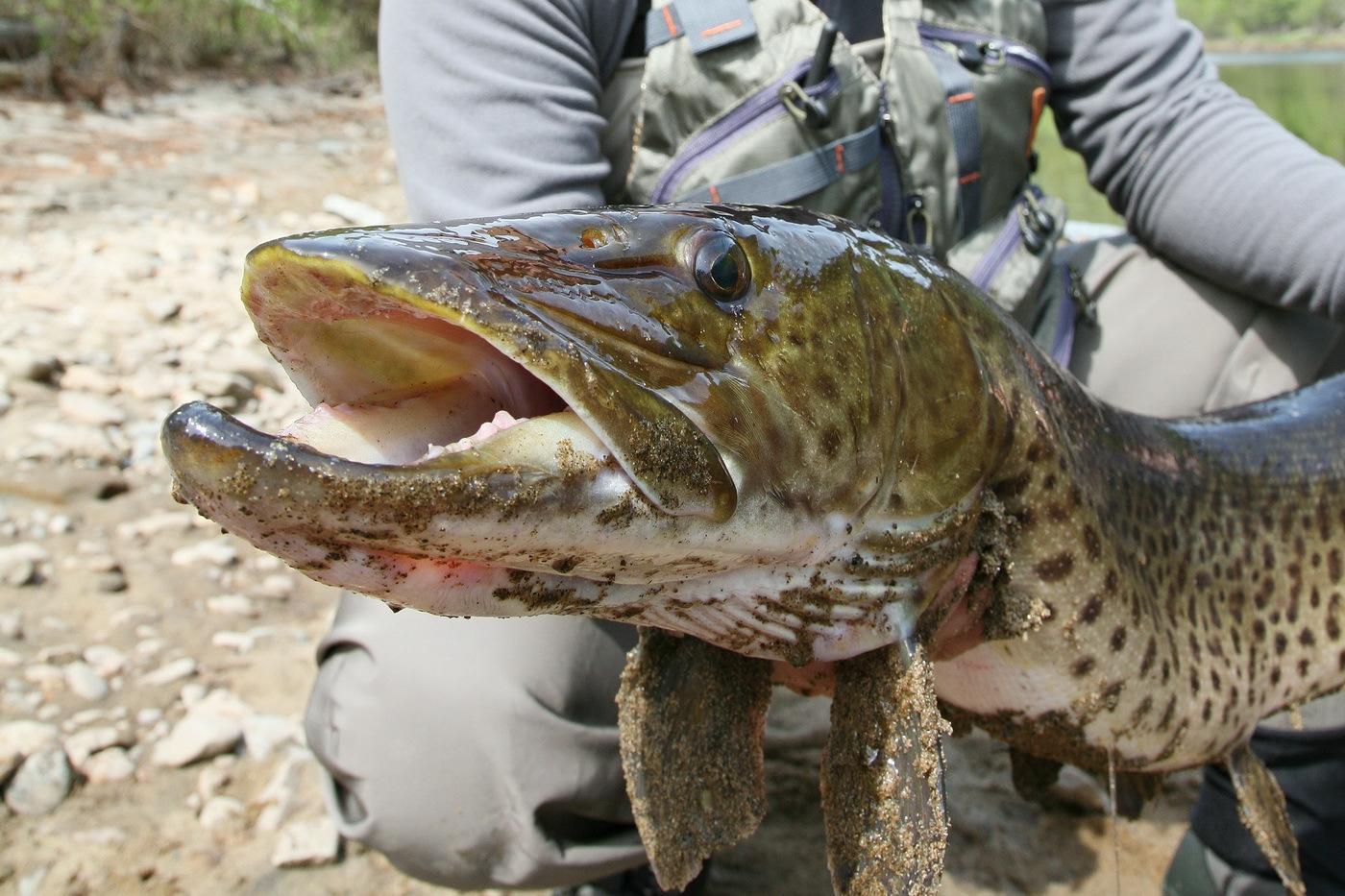 Рыбалка в хабаровском крае