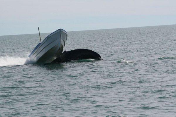 На туристов-рыбаков напал горбатый кит. 13879.jpeg