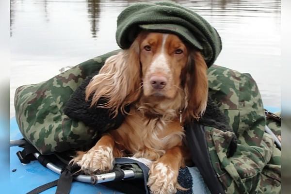 Собака для рыбака.. 13891.jpeg