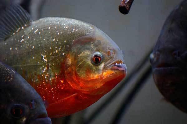 Блиц о самых, самых рыбах.. 13902.jpeg