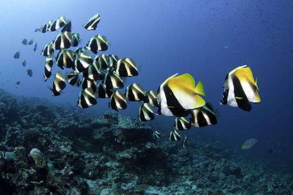 Ищем лидера: кто ведет за собой стаю рыб. 14903.jpeg