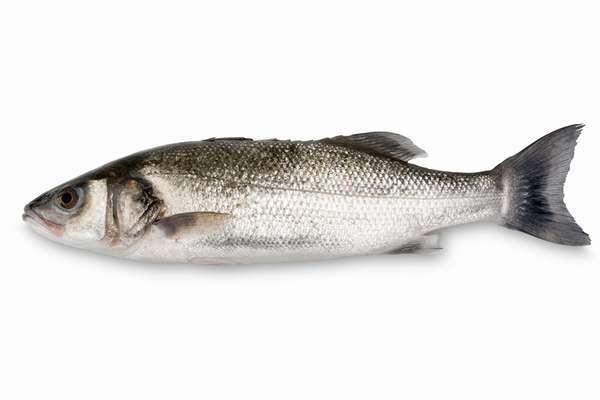 Рыбалка в Греции: как поймать сибаса. 15924.jpeg