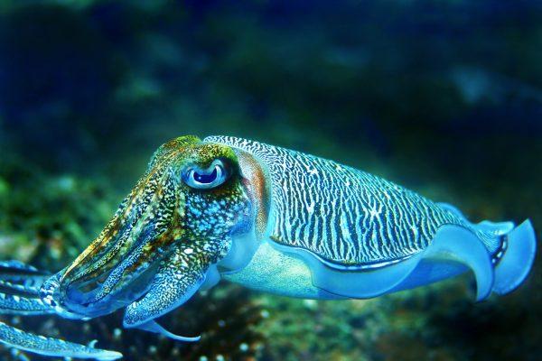 Морская хищница. 15928.jpeg