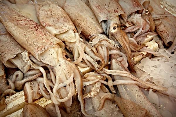Китайские кальмары. 14941.jpeg