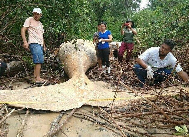 В мангровых зарослях нашли кита. 14950.jpeg
