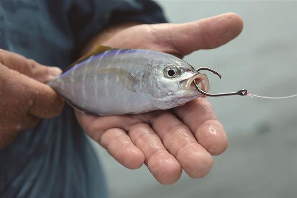 Что такое, живцы для рыбалки.. 15952.jpeg