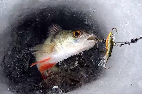 Особенности техники зимнего прикармливания рыбы.. 13958.jpeg