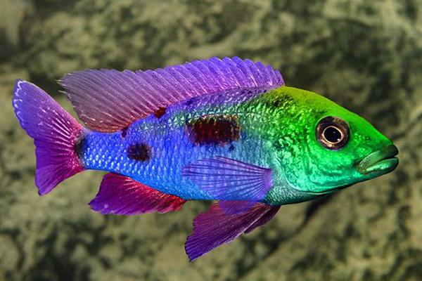 Могут ли рыбы различать цвета?. 15958.jpeg