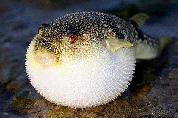 Интересные и неизвестные факты о рыбе. 14961.jpeg
