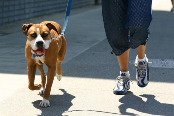 Гулять с собакой очень опасно. 13972.jpeg
