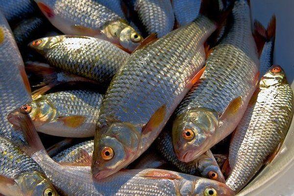 Рыба идет косяками. 13973.jpeg