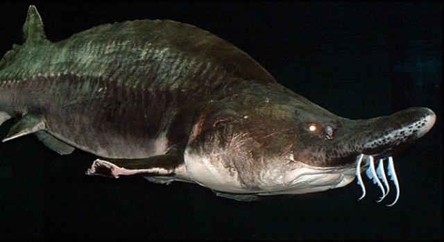 Браконьеров схватили с восемью реликтовыми рыбами. 15976.jpeg
