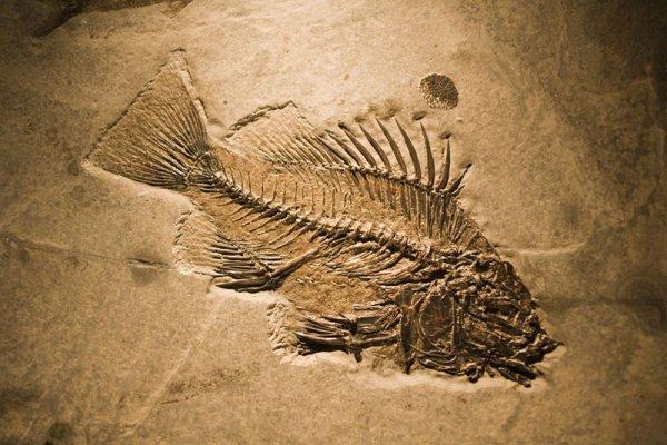 Рыбалка: интересные факты из прошлого. 13978.jpeg