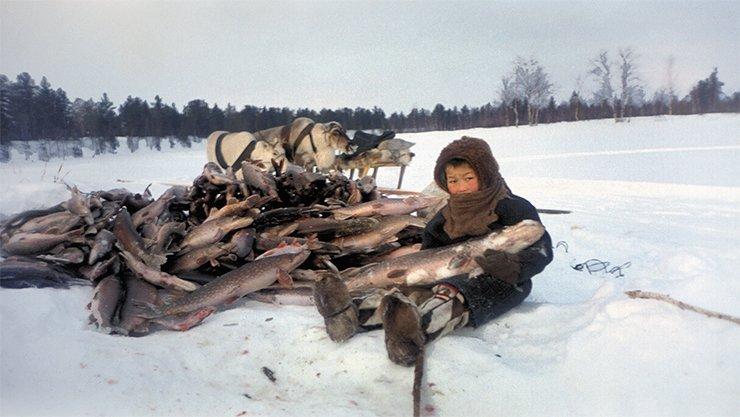 Запятая в законе портила рыбалку северянам. 15979.jpeg