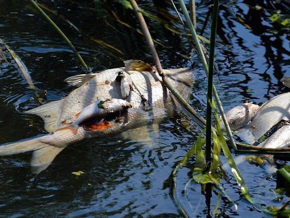 Под Оренбургом обнаружен мор рыбы. 15980.jpeg