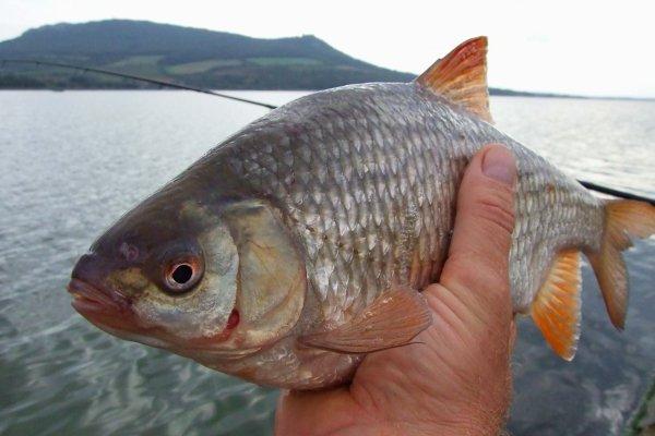 Как правильно приваживать рыбу. 14992.jpeg