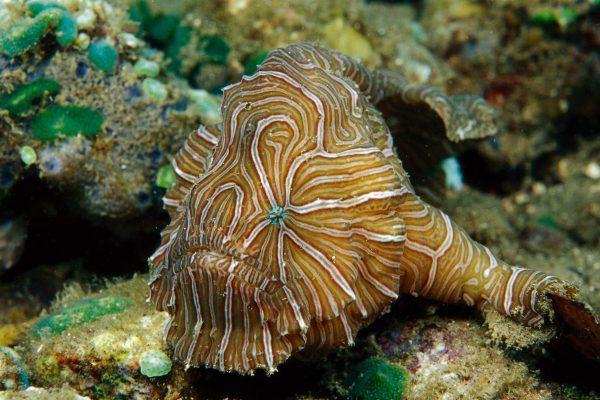 Страшно красивая рыба-лягушка. 13997.jpeg