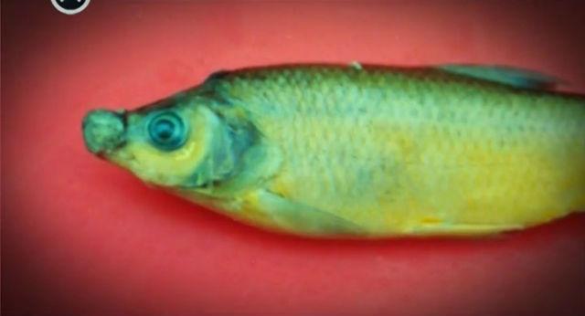Эксперт рассказал о качестве московской рыбы. 15998.jpeg