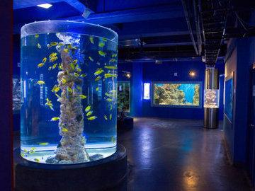В Уфе построят частный океанариум с дельфинами