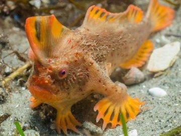Исчезающие виды атлантических рыб. Лопата-рыба