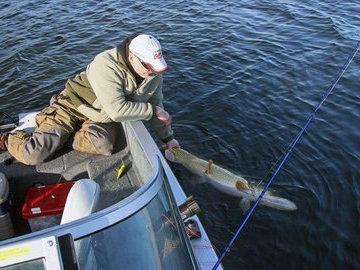 Почему поймать, а потом отпустить - жестоко для рыбы