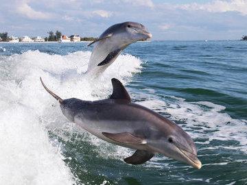 В Крыму туристы помешали специалистам обследовать погибших дельфинов