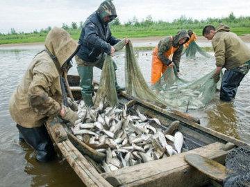 В притоках Амура расписали добычу кеты для КМНС