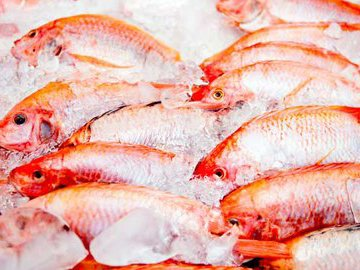 Правильное размораживание рыбы: рекомендации